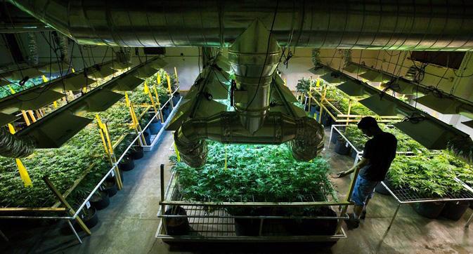 marijuana_pic
