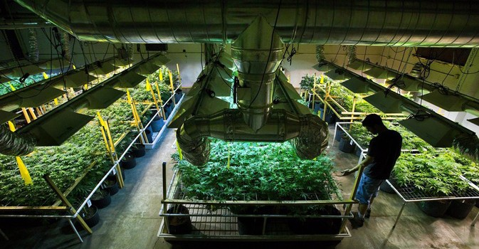 Making Cannabis Green – Energy Efficiency in Cannabis Growing